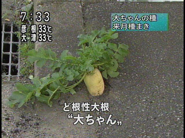 20070808-1.jpg